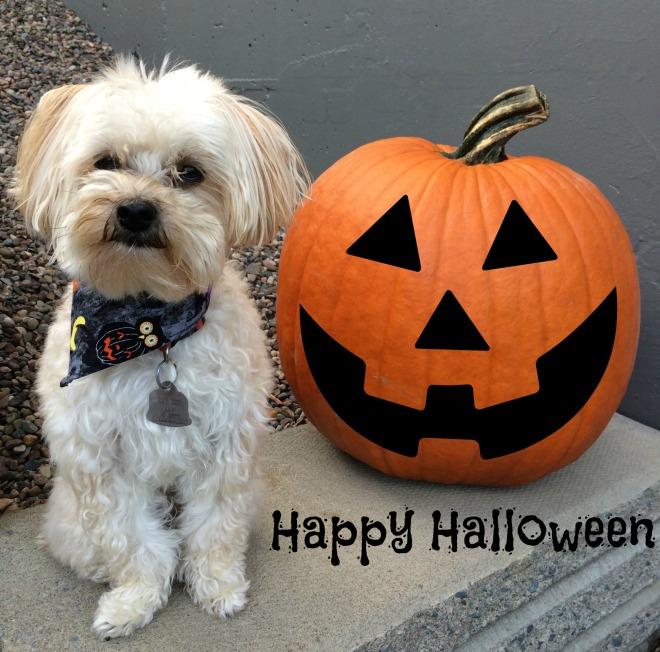Abby Halloween