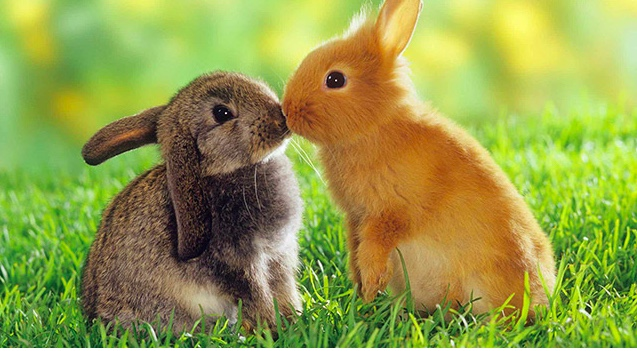 It's not about thebunny